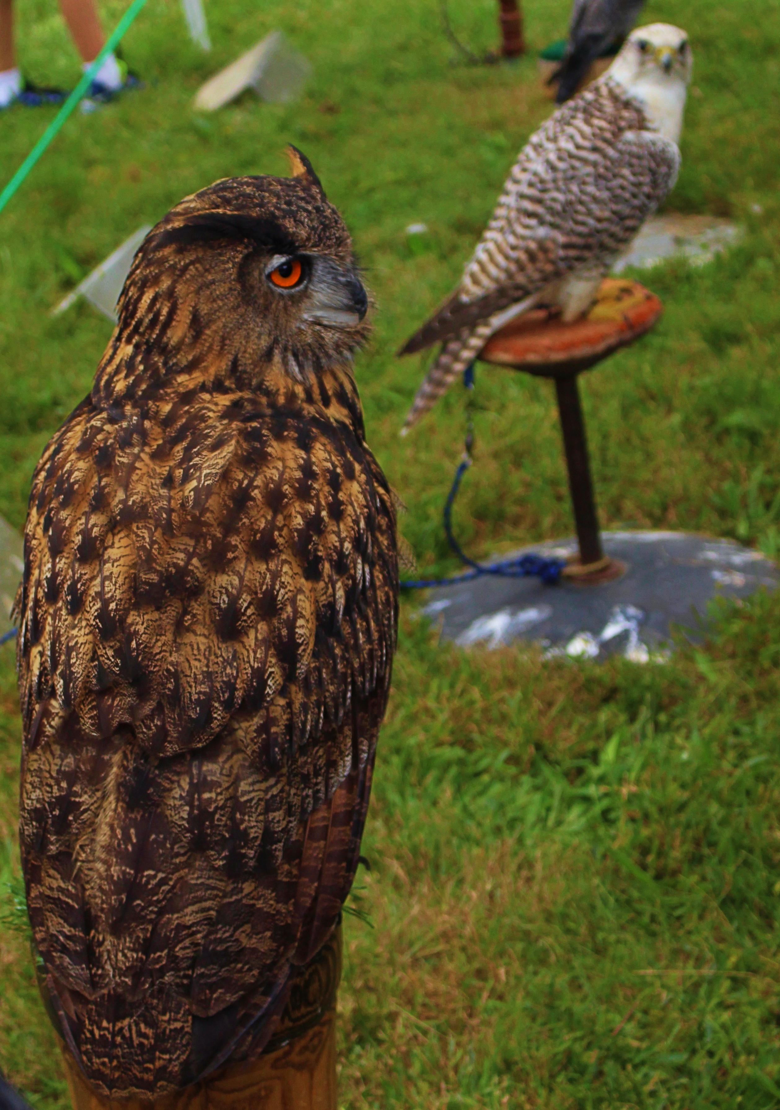 Athena's owl made an appearance/ H.Novak